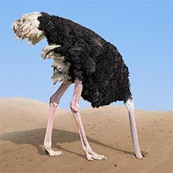 ostrich-img-1